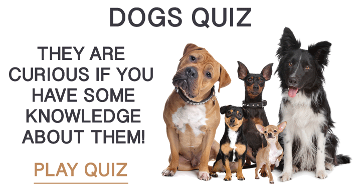 Weqyoua Quiz About Dogs